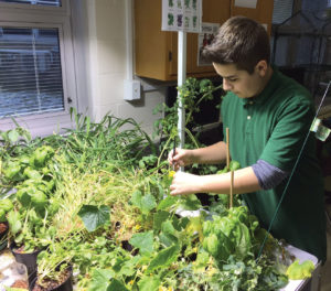 Winslow Township Middle School student David Repsch uses a paint brush to pollinate cucumber plants in the Environmental STEM class led by Ross Cruz.