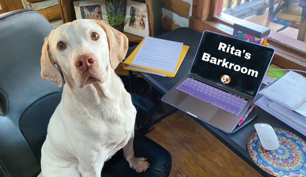 A Shamong Student's Best Friend Remote instruction didn't stop students in Shamong from visiting with Rita, the district's therapy dog. Rita provides support to students who read to her, earn a visit as a reward for good behavior, and who want her to attend their therapy sessions and IEP meetings. Rita, who had her own Google Classroom continued that work during the school closures. Nearly 100 students signed up to visit with Rita, whose owner is a special education teacher in the district.