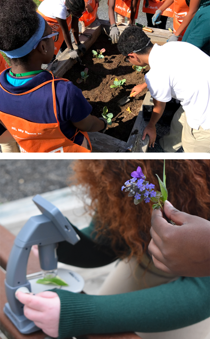 (Top) Winslow Township Middle School student are studying biodiversity and monitoring the ecology of the school's pond and ecosystem. (Above) Students at the Winslow Township Middle School plant herbs and vegetables they started indoors from seeds in raised courtyard garden beds.